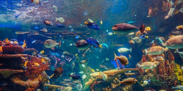 RD-Aquarium